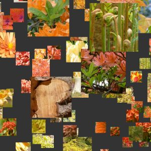 Bodnant Garden Mosaic Animations